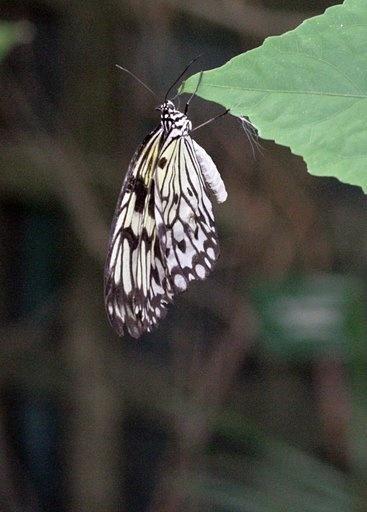Butterfly by block119er