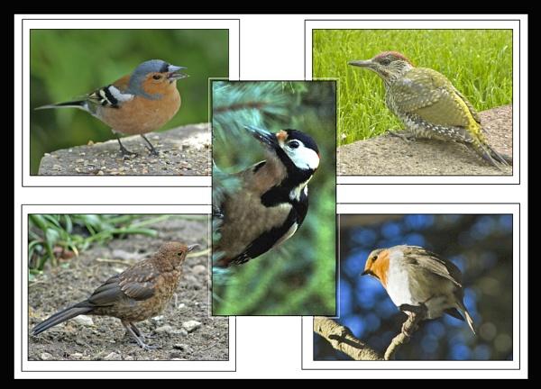 Birds from the garden by roseyemma