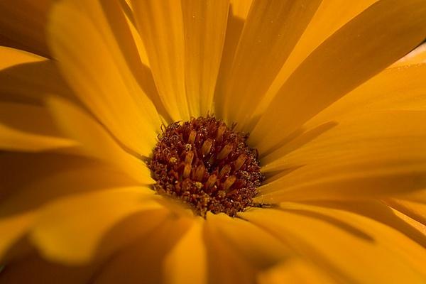 daisy daisy! by buckleyi