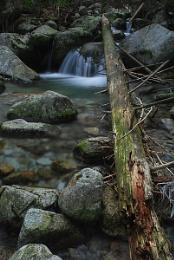 Streams of the Tatras #3