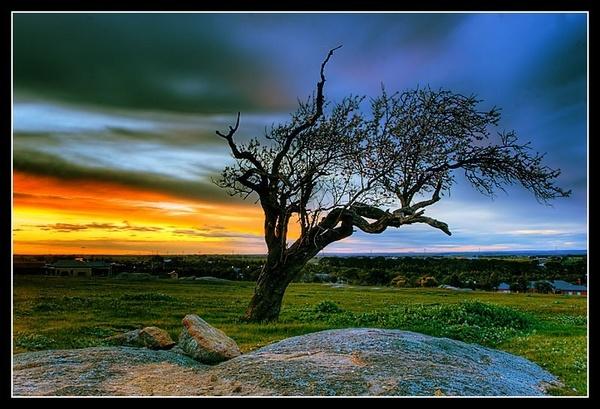 Manfrotto Treepod by timwilson