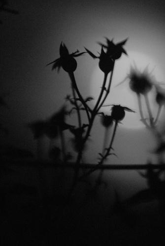 Darkness by RobertZ