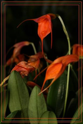 Orchids by skoffs