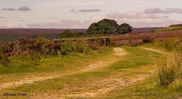 Moorland Track by GlynnisFrith
