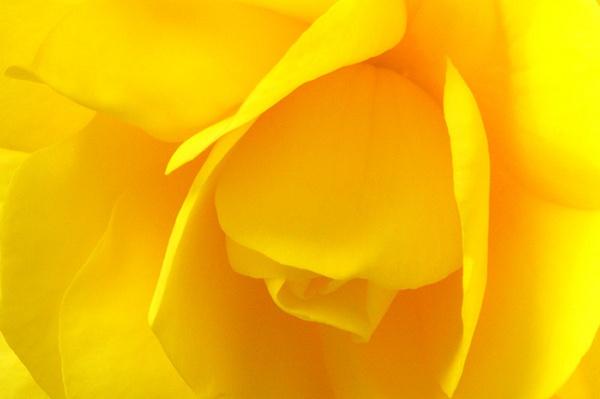 Yellow Folds by DunDiggin
