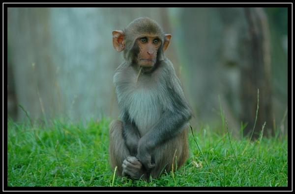 Monkey Business by awesomeshot