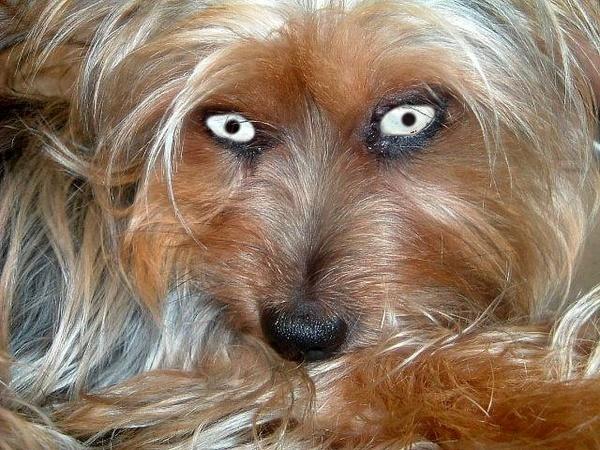 Demonic Dog by Panicat_thedisco