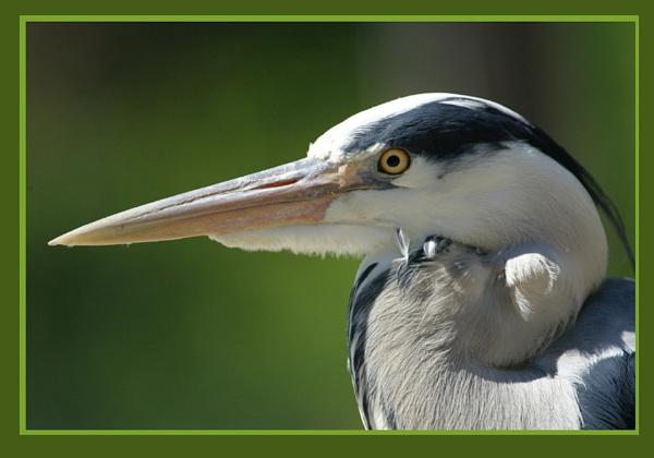Heron by DIGILUX