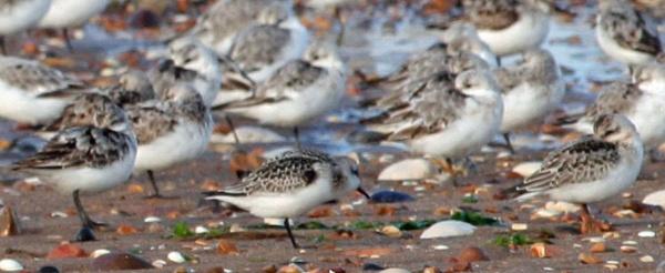 Beach Birds! by PaulaLey