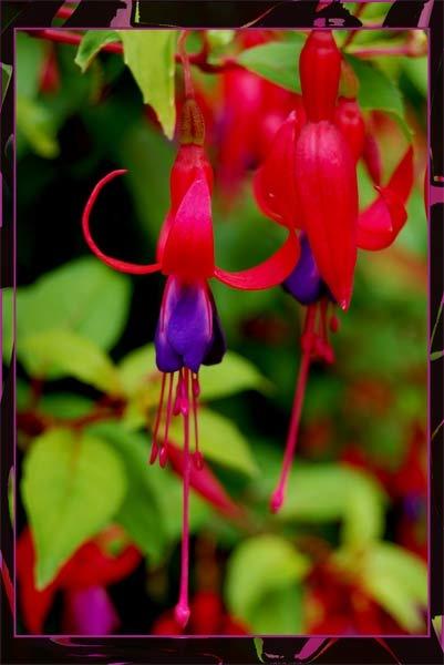 Framed Flower by Ridgeway