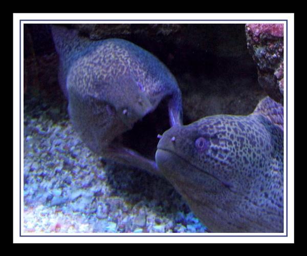Moray eel by moglen