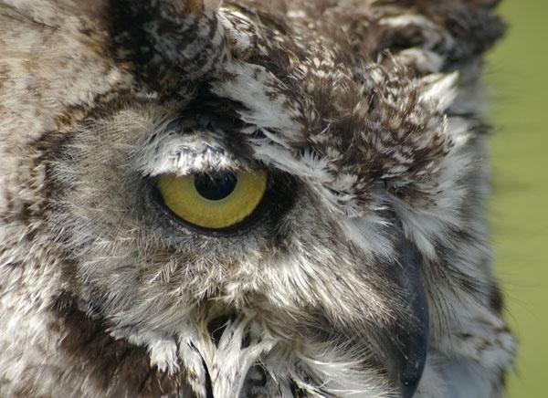 Eye Eye by Sulaco