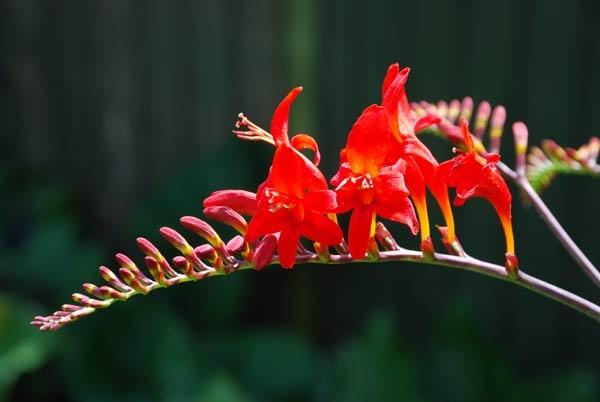 Flower by akw