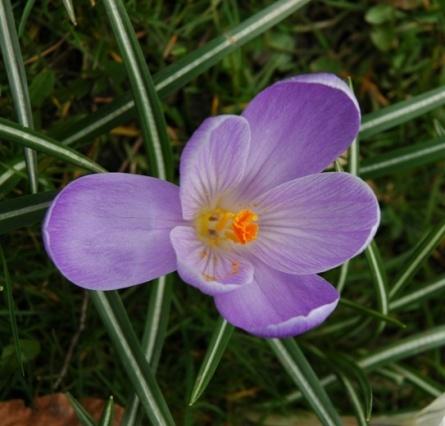 Spring memory by Birdseye