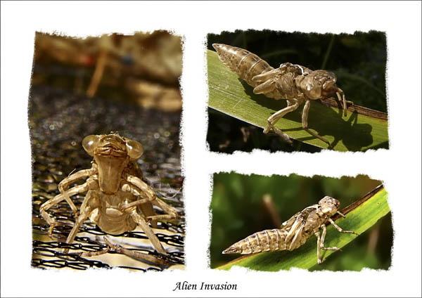 Alien Invasion by mandarinkay