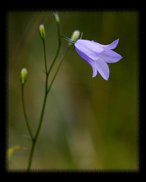 wild flower by pacman