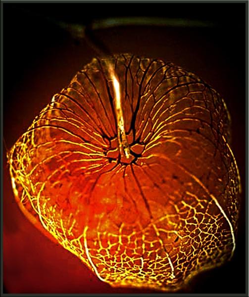 Glow by nigele1