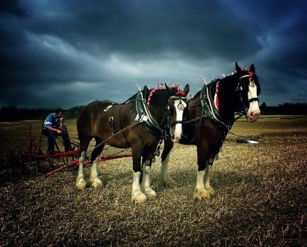 the work horse by jacquienewsham