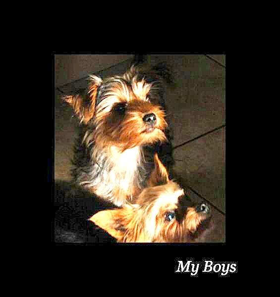 My Boys by Kool_Kat