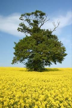 Tree in field by Muppet