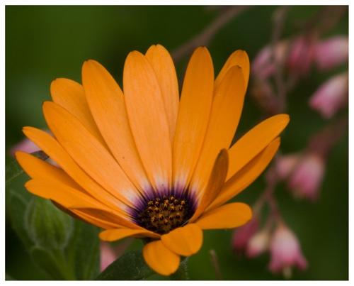Orange and Purple by skoffs