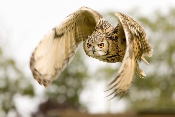 Eager Eye! by SuffolkLozza