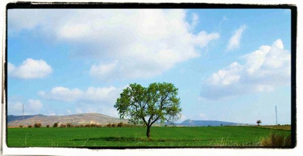 Tree by adgvelazquez