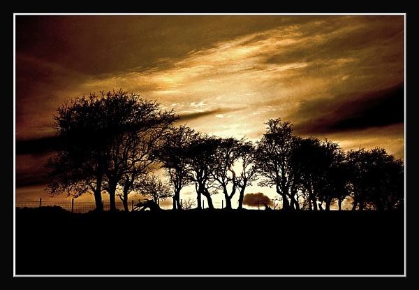 treeline by bobalot