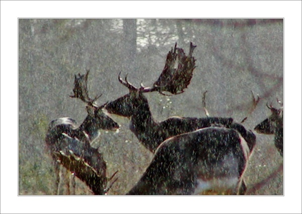 Deer by essien