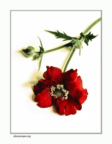 Flower by graeme34