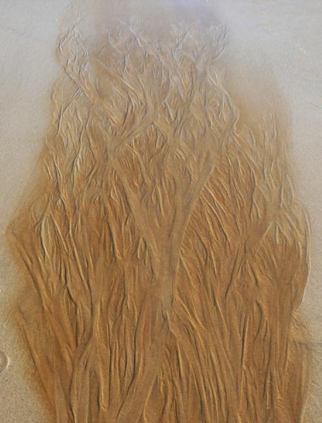 A tree or flames? by auraalan