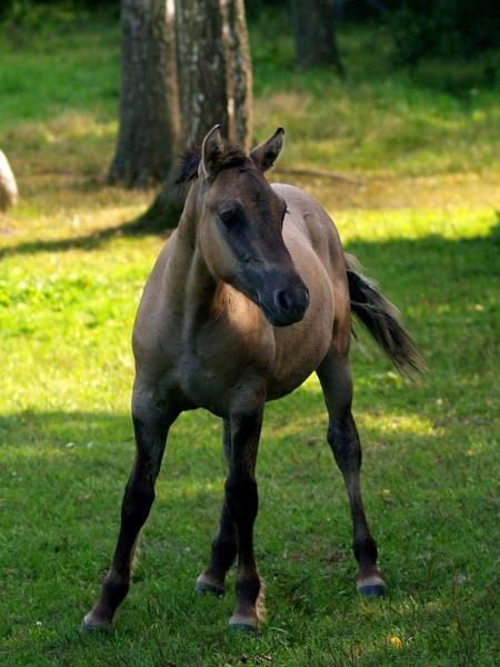 Wild horse by andora6878