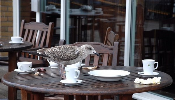 Even Seagulls need a tea break by Digi