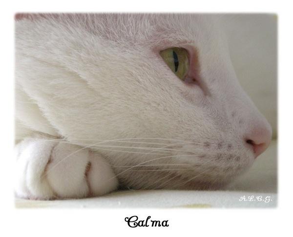 Calma by catalania