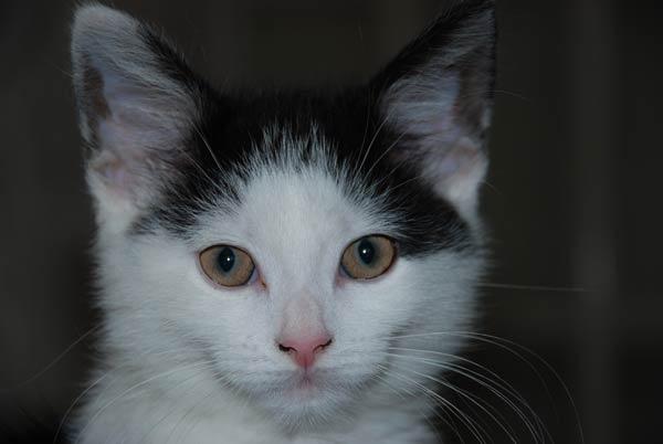 Kitty Cat by akw