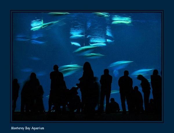 Monterey Bay Aquarium by JoeBo