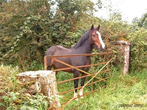 Gracious Horse by barn yard