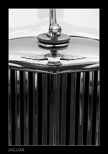 Jaguar by Snapper_T