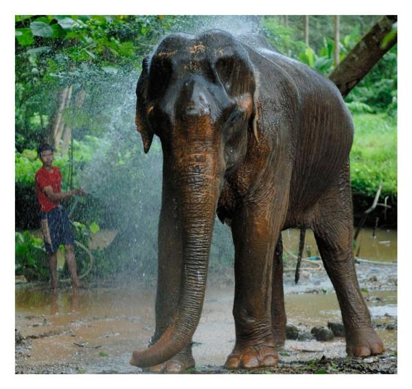Elephant Wash by Doclassie