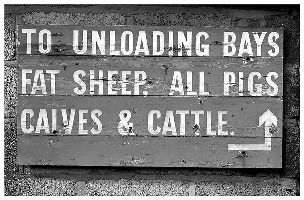 Fat Sheep?!! by Lenz