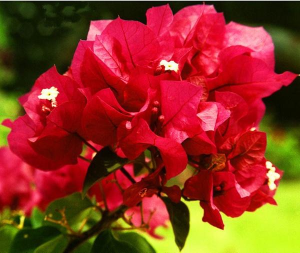 flower by brianwakeling