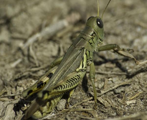 grasshopper by LeonHall
