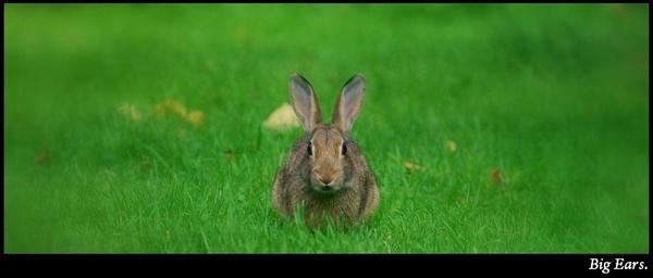 Big Ears. by S_Boulding