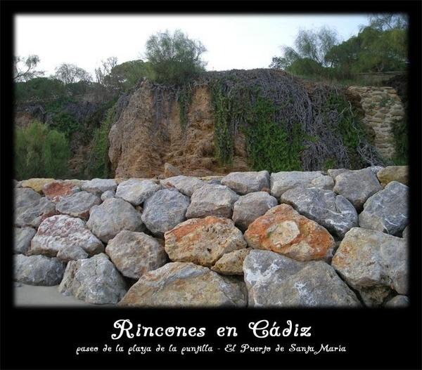 Rinones en Cádiz - Paseo por la playa 2 by catalania