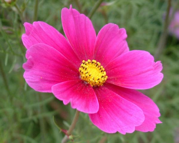 Flower 1 by davevee