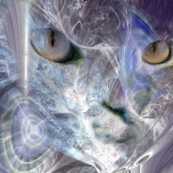 Web Cat by Paree