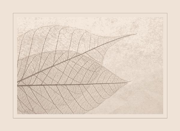 delicate by CaroleA
