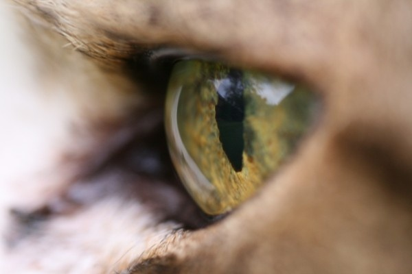 Cat\'s Eye by ben_stubbens
