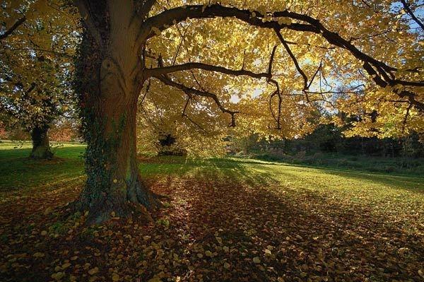 Autumn Hues by BillM