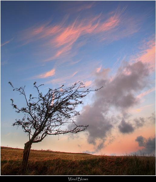 Wind Blown by Kris_Dutson